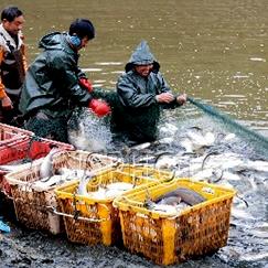 水产养殖收益高